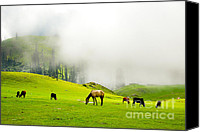 High Quality Canvas Prints - Meadows of Heaven Canvas Print by Syed Aqueel