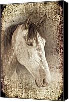 Horse Portrait  Canvas Prints - Meet The Andalucian Canvas Print by Meirion Matthias
