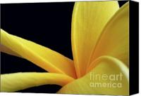 Florida Flowers Canvas Prints - Mellow Yellow Canvas Print by Sabrina L Ryan