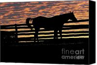 Photo-realism Photo Canvas Prints - Memorial Day Weekend Sunset in Georgia - Horse - Artist Cris Hayes Canvas Print by Cris Hayes