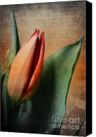 Tulip Mixed Media Canvas Prints - Memories Canvas Print by Angela Doelling AD DESIGN Photo and PhotoArt