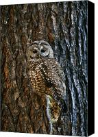 Singular Canvas Prints - Mexican Spotted Owl Camouflaged Against Canvas Print by Natural Selection David Ponton