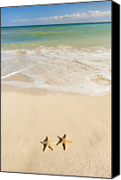 All Star Canvas Prints - Mexico, Yucatan, Two Starfish On Beach Canvas Print by Tetra Images