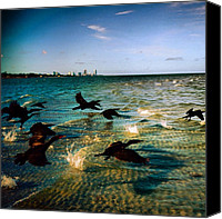 Beach Canvas Prints - #miami #nature #birds #sea #beach #keys Canvas Print by Joel Lopez