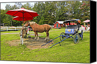 Horse Carriage Canvas Prints - Midday Snack Canvas Print by James Steele