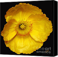 Poppy Digital Art Canvas Prints - Midnight Poppy Canvas Print by Ben and Raisa Gertsberg