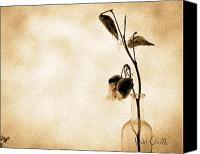 Black And White Photo Canvas Prints - Milk Weed In A Bottle Canvas Print by Bob Orsillo