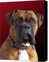 Boxer Canvas Prints - Milo Canvas Print by Kenton Smith