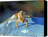 Lizard Canvas Prints - Mini Attitude Canvas Print by Kenneth Albin