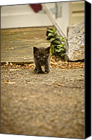 Predatory Canvas Prints - Miniature Stalker Canvas Print by Heather Applegate