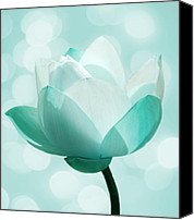 Lotus Canvas Prints - Mint Canvas Print by Photodream Art