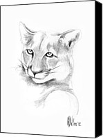 Lion Drawings Canvas Prints - Missouri Mountain Lion  Canvas Print by Kip DeVore