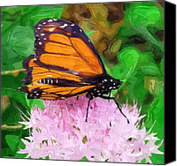 Butterfly On Flower Mixed Media Canvas Prints - Mister Monarch Canvas Print by Chris Reed
