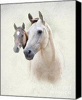 Buddies Canvas Prints - Misty Canvas Print by Betty LaRue