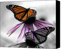 Black And White Digital Art Canvas Prints - Monarch Butterflies Canvas Print by Evelyn Patrick