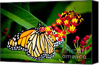 Monarch  Canvas Prints - Monarch Butterfly at lunch with 2 Box Elder Bugs Canvas Print by Andee Photography