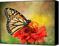 Monarch  Canvas Prints - Monarch Butterfly Canvas Print by Darren Fisher