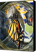 Steve Augustin Canvas Prints - Monarch in a Jar Canvas Print by Steve Augustin
