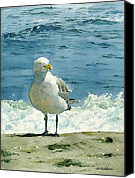 Seagull Canvas Prints - Montauk Gull Canvas Print by Tom Hedderich