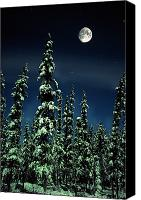Snowy Night Canvas Prints - Moon And Trees, Teslin, Yukon Canvas Print by Robert Postma