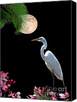 Great Egret Canvas Prints - Moon over Florida Canvas Print by Betty LaRue