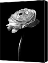 Flower Images Canvas Prints - Moonlight Serenade - Closeup Black And White Rose Flower Photograph Canvas Print by Artecco Fine Art Photography - Photograph by Nadja Drieling