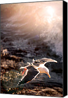 Cambria Photo Canvas Prints - Moonstone Beach Seagull Canvas Print by Michael Rock