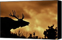 Moose Canvas Prints - Moose At Sunrise Canvas Print by Photo by James Keith