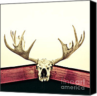 White Canvas Prints - Moose Trophy Canvas Print by Priska Wettstein