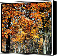 Nature Canvas Prints - More #fall #colors Canvas Print by Adam Romanowicz