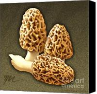 Mushroom Drawings Canvas Prints - Morel Mushrooms Canvas Print by Marshall Robinson