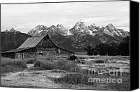 Bison Canvas Prints - Mormon Row Famous Barn Canvas Print by Teresa Zieba