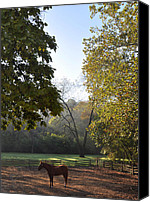 Chestnut Hill Canvas Prints - Morning at the Stables Canvas Print by Bill Cannon