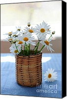 Wildflower Canvas Prints - Morning daisies Canvas Print by Elena Elisseeva