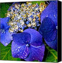 Lovely Looking Flower Canvas Prints - Morning Dew Kissed Canvas Print by Debra     Vatalaro