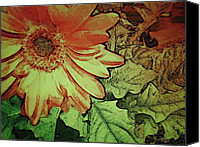 Daisies Pyrography Canvas Prints - Morning Flower 1 Canvas Print by Cynthia Edwards