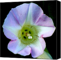 Wildflower Canvas Prints - Morning Glory Floral Window Canvas Print by Neal  Eslinger