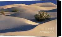 Death Valley National Park Canvas Prints - Morning in Death Valley Dunes Canvas Print by Sandra Bronstein