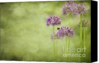 Photomanipulation Photo Canvas Prints - Morning in the Garden Canvas Print by Reflective Moments  Photography and Digital Art Images