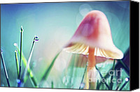 Mushroom Canvas Prints - Morning Light Canvas Print by Sylvia Cook