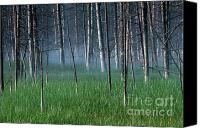 Bobby Canvas Prints - Morning Mist in Yellowstone Canvas Print by Sandra Bronstein