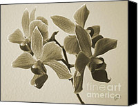 White Canvas Prints - Morning Orchid Canvas Print by Ben and Raisa Gertsberg