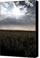 Country Scenes Canvas Prints - Morning Over The Wheat Canvas Print by Emily Stauring