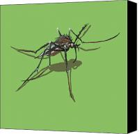 Insects Painting Canvas Prints - Mosquito Canvas Print by Jude Labuszewski