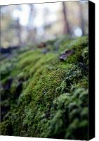 Forest Floor Canvas Prints - Mossy Log Canvas Print by Carole Hinding