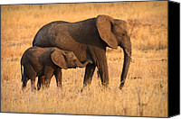Exotic Canvas Prints - Mother and Baby Canvas Print by Adam Romanowicz