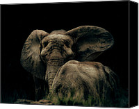Calf Canvas Prints - Mother and Child Canvas Print by Arne Hansen