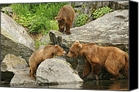 Kodiak Canvas Prints - Mother and Cubs Canvas Print by Mike Cavanaugh