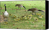 Mother Goose Mixed Media Canvas Prints - Mother Goose with Baby Goslings Canvas Print by Photography Moments - Sandi
