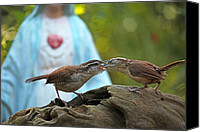 Wren Digital Art Canvas Prints - Mother Wren Feeding Juvenile Wren Canvas Print by Luana K Perez